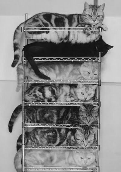 cats sleeping on stacked shelves.